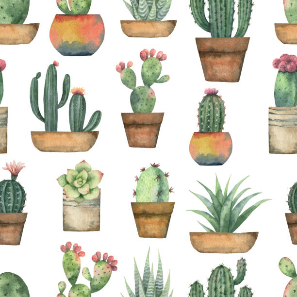 Watercolor vector seamless pattern of cacti and succulent plants isolated on white background. Watercolor vector seamless pattern of cacti and succulent plants isolated on white background. Flower illustration textile, paper and other print and web projects. potted plant stock illustrations