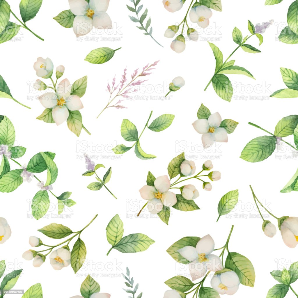 Watercolor vector seamless pattern of flowers and branches Jasmine isolated on a white background. vector art illustration