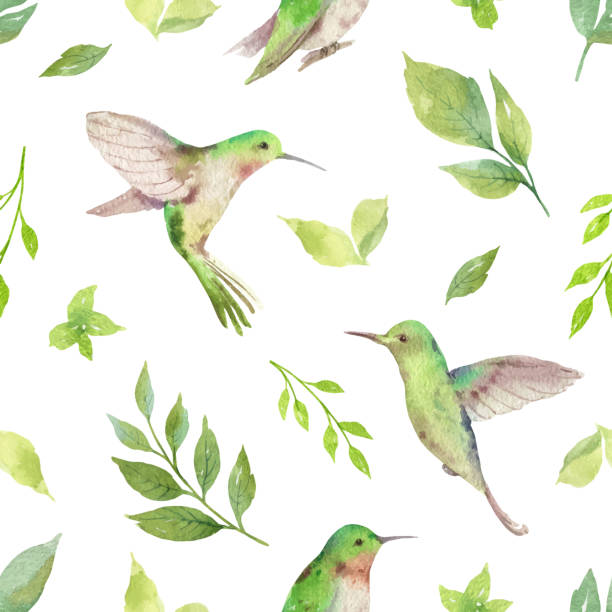 watercolor vector seamless pattern with hummingbird and green branches isolated on white background. - hummingbird stock illustrations