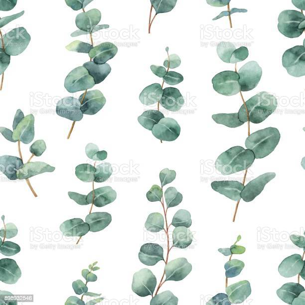 Watercolor vector seamless pattern with silver dollar eucalyptus and vector id898932546?b=1&k=6&m=898932546&s=612x612&h=egheel6wdic5kkyt38psm0jz7wfnrdhrv7wqijnabrw=