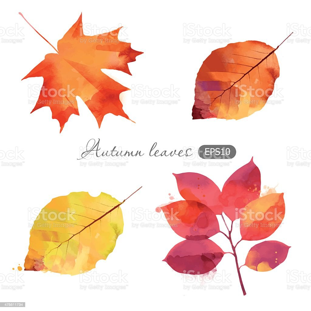 Watercolor vector set of autumn leaves vector art illustration