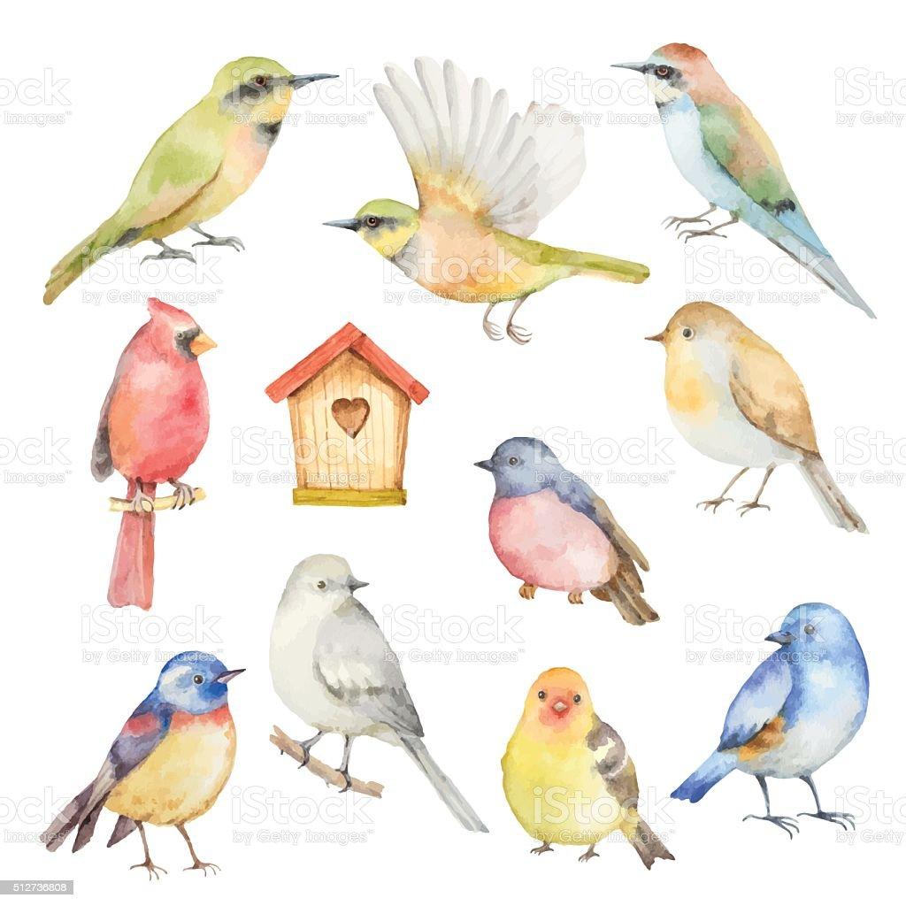Akwarela Wektor Zestaw ptaków. - Grafika wektorowa royalty-free (Akwarela)