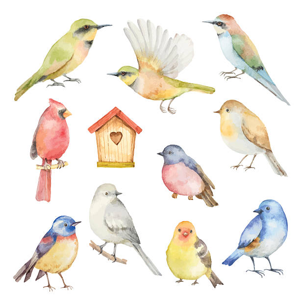 watercolor vector set of birds. - birds stock illustrations