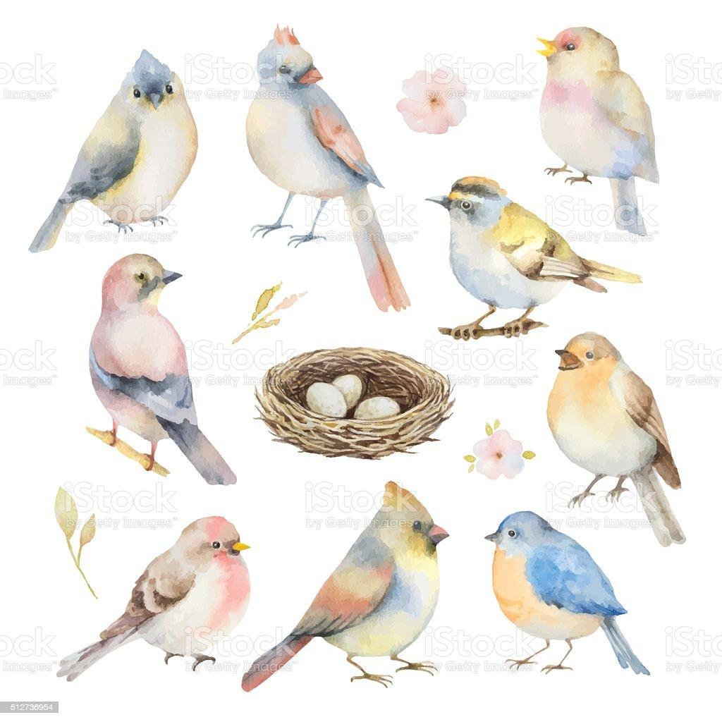 Watercolor vector set of birds. vector art illustration
