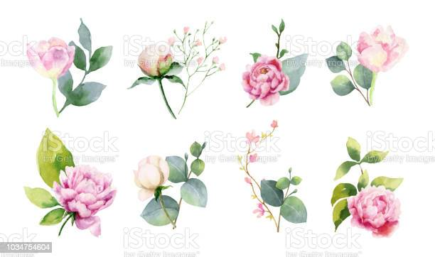 Watercolor vector set of bouquets of green branches and flowersset of vector id1034754604?b=1&k=6&m=1034754604&s=612x612&h=v0be8nm1u16felzvwuagajkk6sp19xdjyjcegv4qzoc=