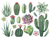 Watercolor vector set of cacti and succulent plants isolated on white background. Flower illustration for your projects, greeting cards and invitations.