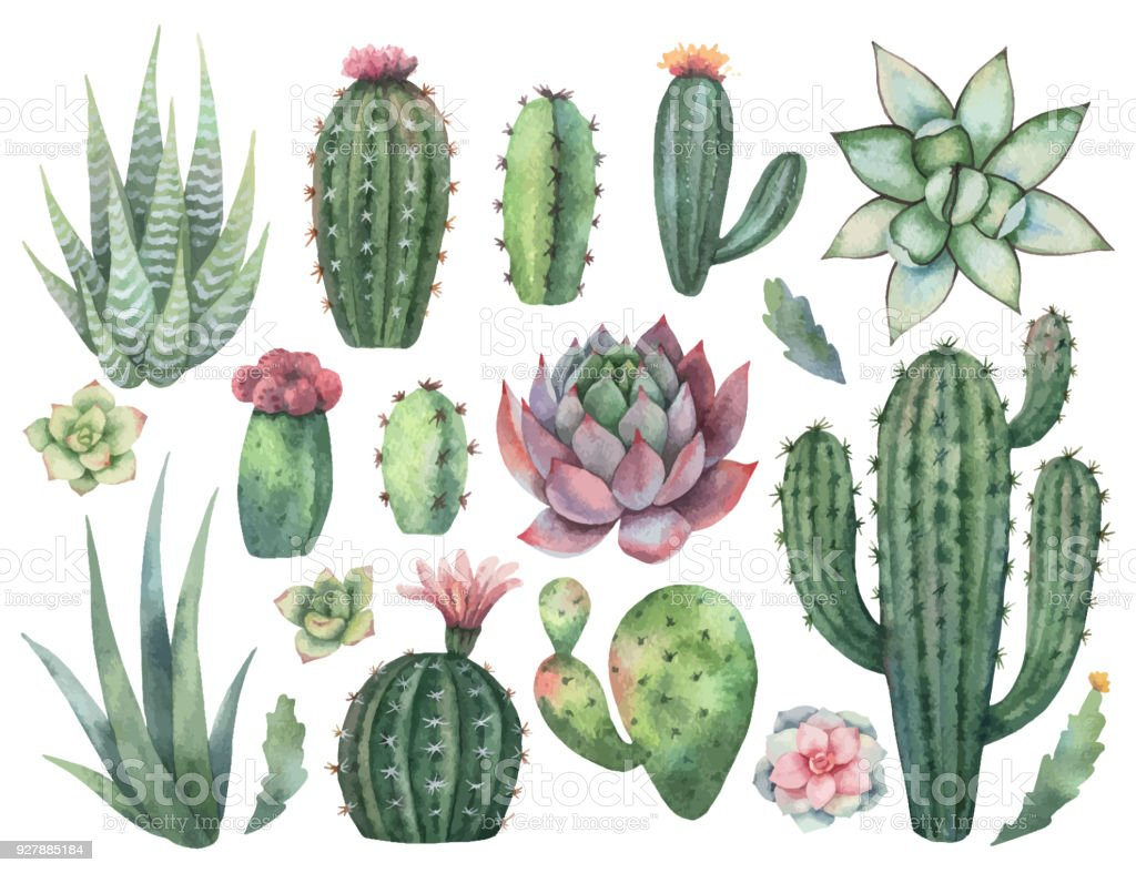 Watercolor vector set of cacti and succulent plants isolated on white background. vector art illustration