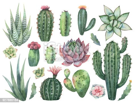 watercolor vector set of cacti and succulent plants