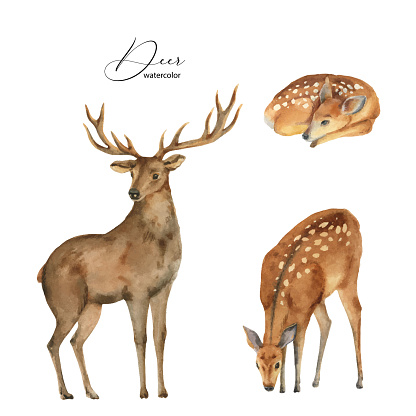 Watercolor vector set with deer, DOE and fawn isolated on a white background. Perfect graphic for  greeting cards, party invitations, photos, scrapbooking, packaging, posters, quotes and more.