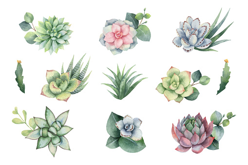 Watercolor vector set with eucalyptus leaves and succulents.