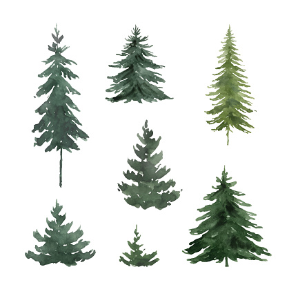 Watercolor vector set with green fir trees. Hand painted illustration for greeting floral postcard and invitations isolated on white  background.