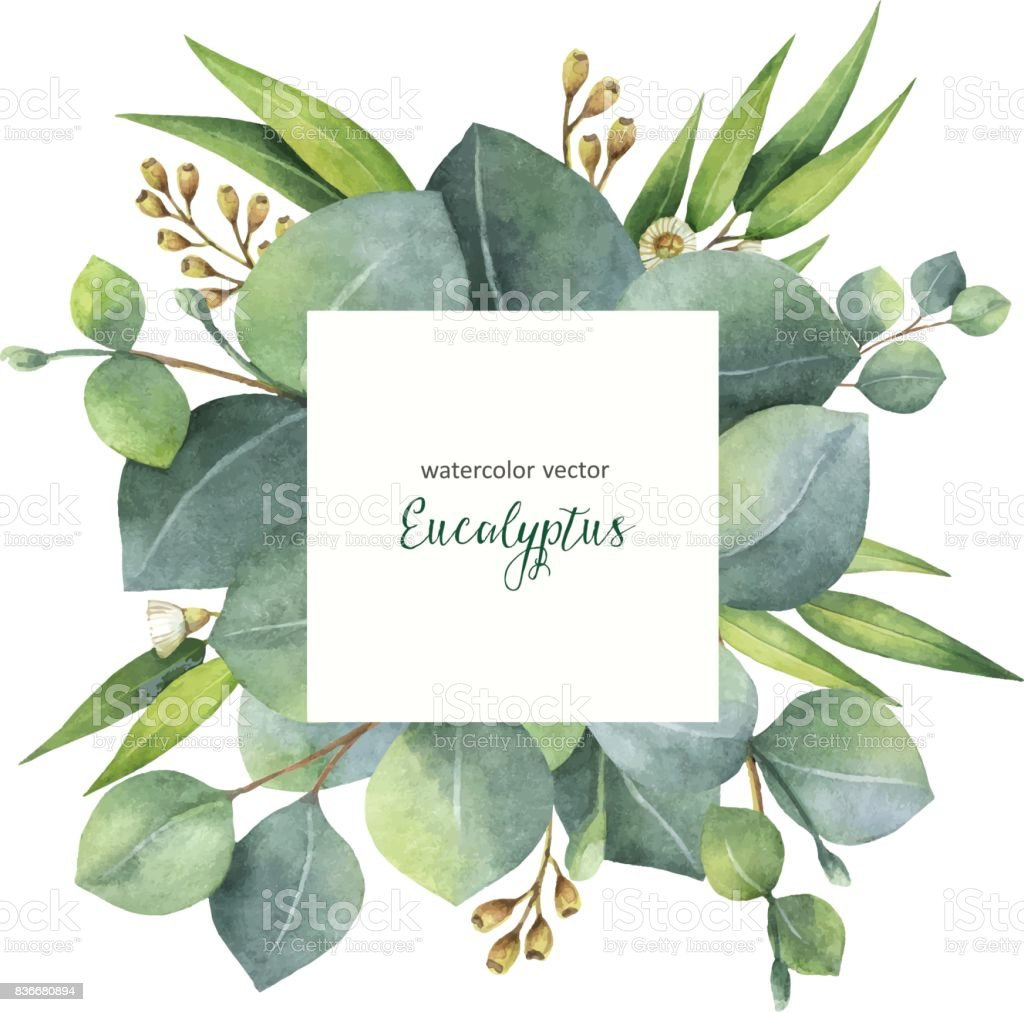 Watercolor vector square wreath with eucalyptus leaves and branches. vector art illustration
