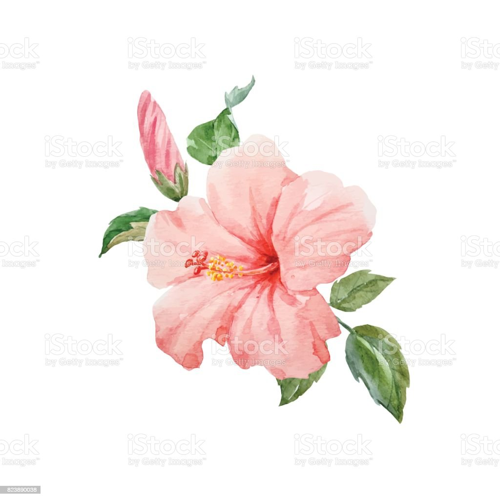 Watercolor vector tropical hibiscus flower stock vector art more watercolor vector tropical hibiscus flower royalty free watercolor vector tropical hibiscus flower stock vector art izmirmasajfo Image collections