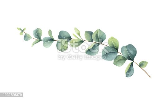 istock Watercolor vector vector hand painted green eucalyptus branch. Floral illustration isolated on white background. 1222726379