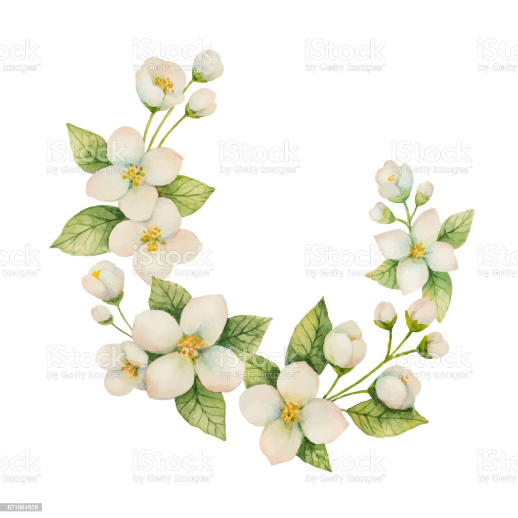 Watercolor vector wreath of flowers and branches jasmine isolated on watercolor vector wreath of flowers and branches jasmine isolated on a white background royalty izmirmasajfo