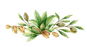 istock Watercolor vector wreath of fruits and leaves of almonds. Flower hand painted illustration for greeting cards, wedding invitations, kitchen decor, posters and more. 1212673804