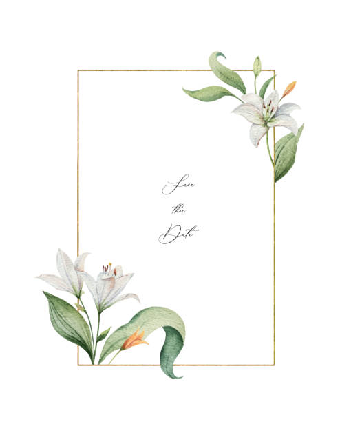 Watercolor vector wreath of Lily flowers and green leaves. Watercolor vector wreath of Lily flowers and green leaves. illustration for cards, wedding invitation,save the date or greeting design. Summer flowers with space for your text. lily stock illustrations