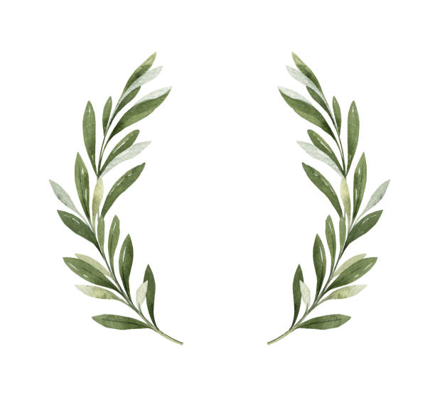 Watercolor vector wreath of olive branches and berries. Watercolor vector wreath of green olive branches and berries. Hand drawn illustration for sports achievements, awards, victories and success.. lush foliage stock illustrations