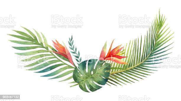 Watercolor vector wreath tropical leaves and branches isolated on vector id953467132?b=1&k=6&m=953467132&s=612x612&h=i9vnljhmvny269n388k27xbeviwylykxi3ibn1eqe3e=