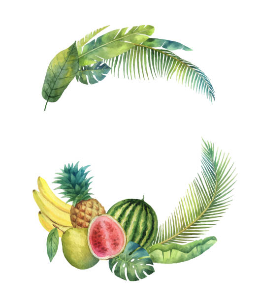 Watercolor vector wreath tropical leaves and fruits isolated on white background. Watercolor vector wreath tropical leaves and fruits isolated on white background. Illustration for design wedding invitations, greeting cards, postcards with space for your text. banana borders stock illustrations
