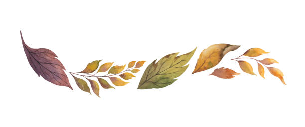 Watercolor vector wreath with autumn leaves isolated on white background. Watercolor vector wreath with autumn leaves isolated on white background. Arrangement for greeting cards, wedding invitations, invite and decorations. fall leaves stock illustrations
