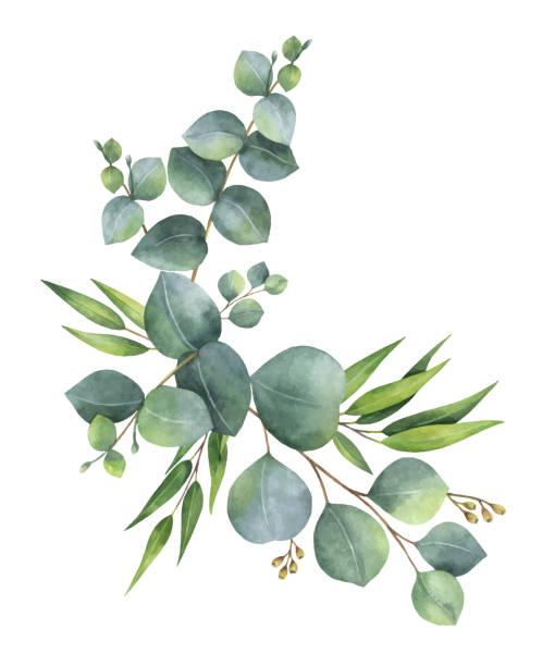 wieniec wektor akwarelowy z zielonymi liśćmi eukaliptusa i gałęziami. - gałąź część rośliny stock illustrations