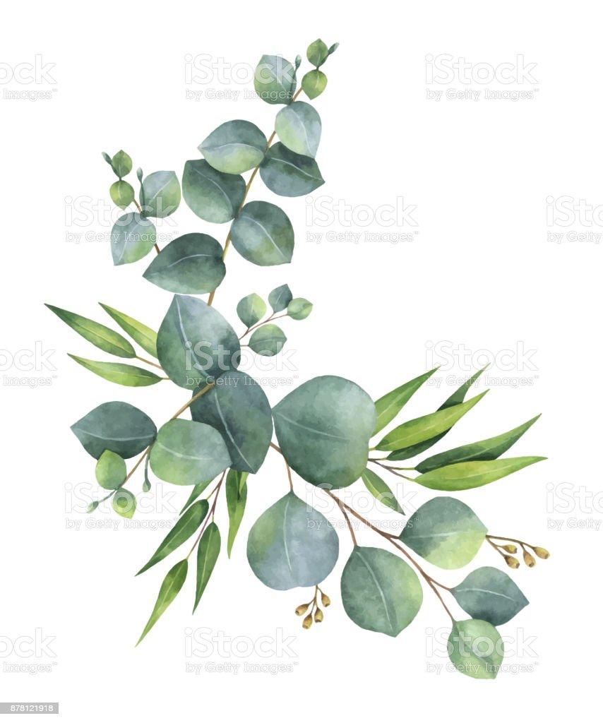 녹색 유 칼 리 나무와 화 환 수채화 벡터 나뭇잎과 가지. 벡터 아트 일러스트