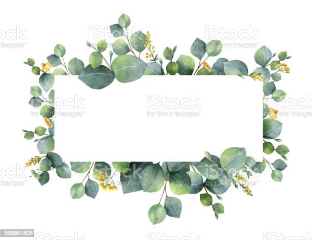 Watercolor vector wreath with green eucalyptus leaves and branches vector id886667808?b=1&k=6&m=886667808&s=612x612&h=1as n54g0cuujtusmckrjo8cs417 5ihx7 i7bpbk28=