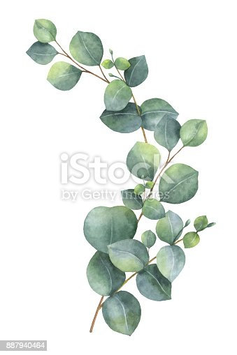 Watercolor Vector Wreath With Green Eucalyptus Leaves And Branches Stock Vector Art Amp More
