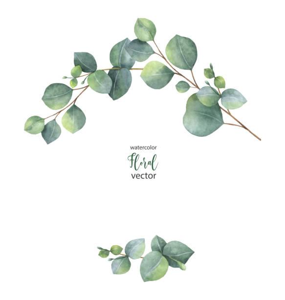 bildbanksillustrationer, clip art samt tecknat material och ikoner med akvarell vektor krans med grön eucalyptus blad och grenar. - eucalyptus