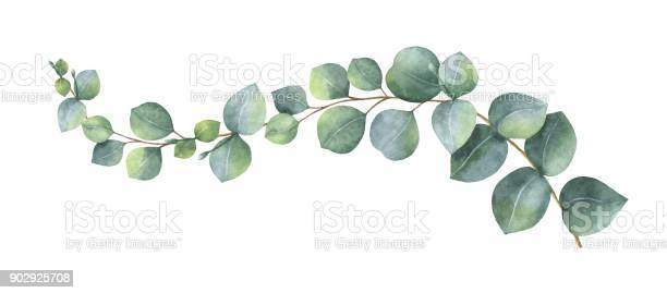Watercolor vector wreath with green eucalyptus leaves and branches vector id902925708?b=1&k=6&m=902925708&s=612x612&h=66rxpl02uewkwjlttnovq5feaklavoafw09vfundxl0=