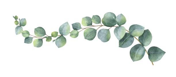 녹색 유 칼 리 나무와 화 환 수채화 벡터 나뭇잎과 가지. - 꽃 식물 stock illustrations