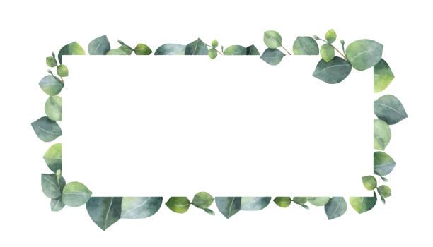 ilustrações, clipart, desenhos animados e ícones de grinalda de vetor em aquarela com ramos e folhas de eucalipto verde. - molduras florais