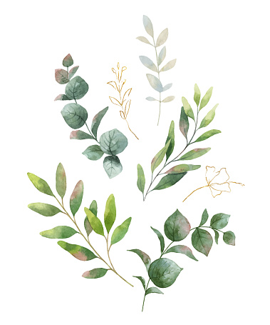 Watercolor vector wreath with green eucalyptus leaves and flowers .