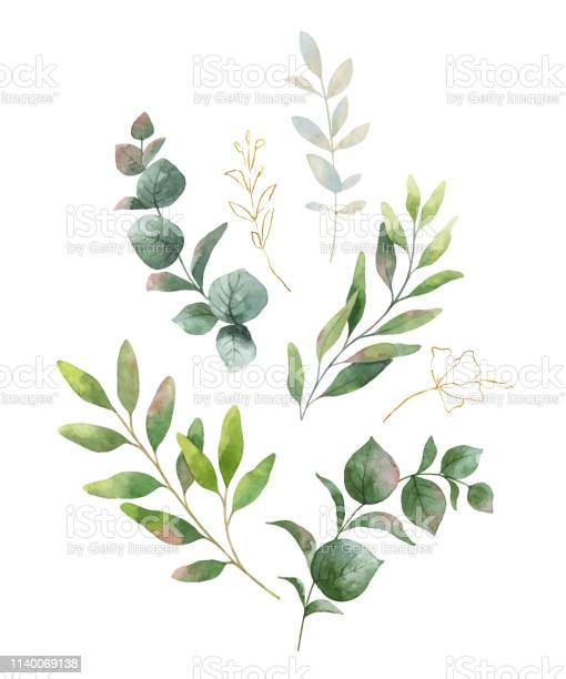 Watercolor vector wreath with green eucalyptus leaves and flowers vector id1140069138?b=1&k=6&m=1140069138&s=612x612&h=8qnzny2yhsarci e9h 2ftkerlvbndarnfuuv9pwffw=