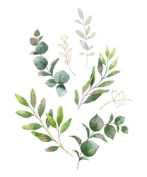 Watercolor vector wreath with green eucalyptus leaves and flowers . Watercolor vector wreath with green eucalyptus leaves and flowers . Spring or summer flowers for invitation, wedding or greeting cards. lush foliage stock illustrations