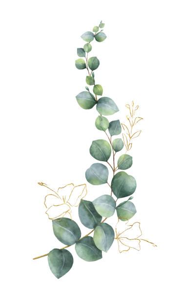 bildbanksillustrationer, clip art samt tecknat material och ikoner med akvarell vektor krans med grön eucalyptus blad och guld element - eucalyptus