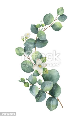 Watercolor vector wreath with green eucalyptus leaves, Jasmine flowers and branches. Spring or summer flowers for invitation, wedding or greeting cards.
