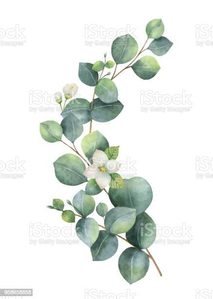 Watercolor vector wreath with green eucalyptus leaves jasmine flowers vector id958658658?b=1&k=6&m=958658658&s=612x612&h=w5l3obfs6tb5jlpobfslgj0jsswxd jn63zzdbzasly=