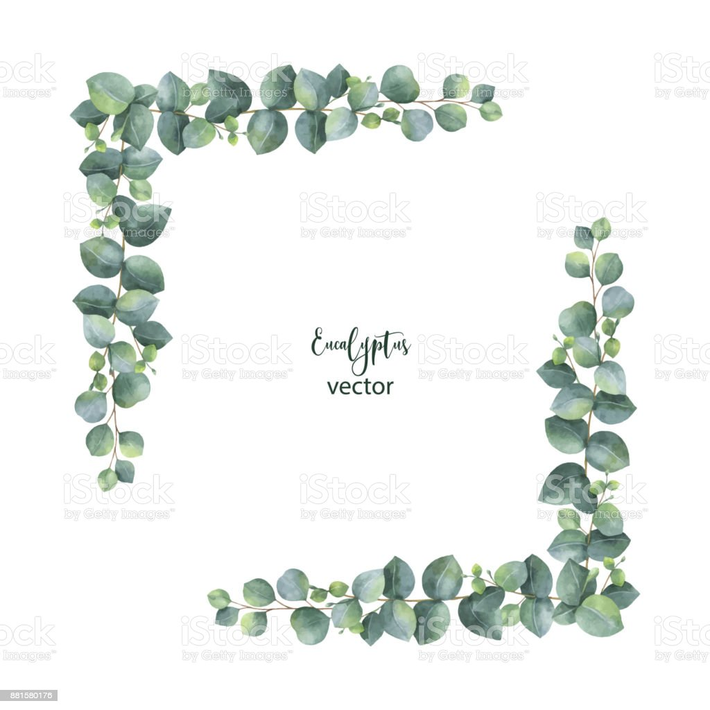 Watercolor vector wreath with silver dollar eucalyptus leaves and branches. vector art illustration