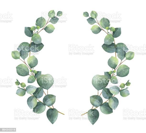 Watercolor vector wreath with silver dollar eucalyptus leaves and vector id894345318?b=1&k=6&m=894345318&s=612x612&h=kfxmzrknwu135qtenoy4rmehsds wsj18 t1dkxcsgq=