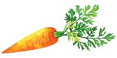 Watercolor vegetable carrot with green leaf