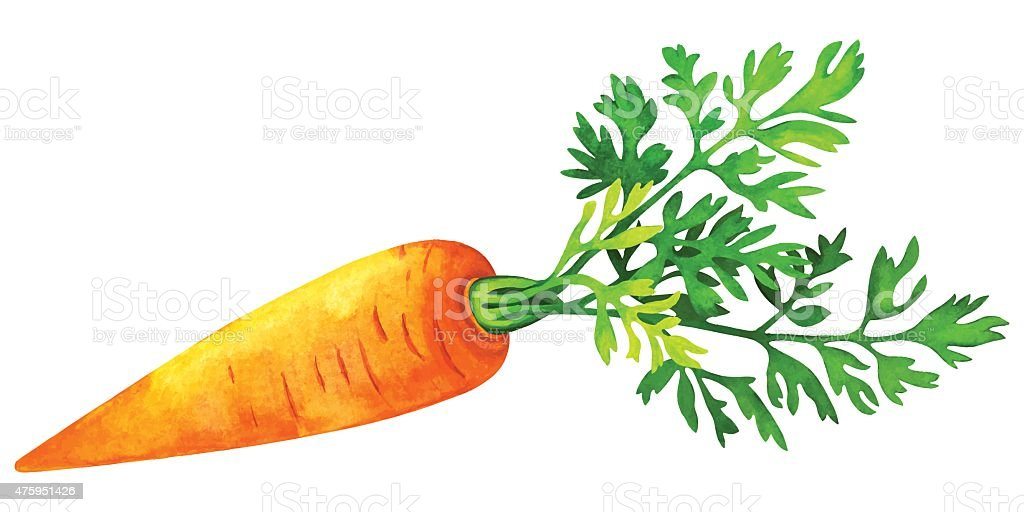 Watercolor vegetable carrot with green leaf vector art illustration