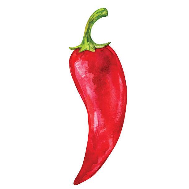 ilustrações de stock, clip art, desenhos animados e ícones de aguarela legumes pimenta quente vermelha grande - red bell pepper isolated