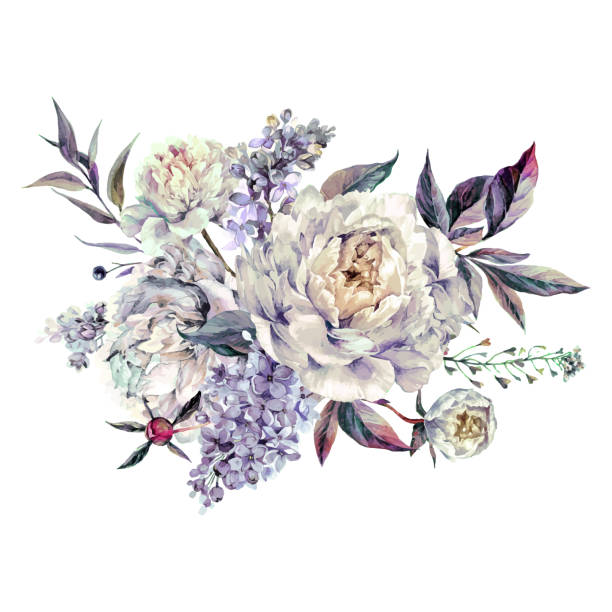 Watercolor White Peonies and Lilac Bouquet vector art illustration