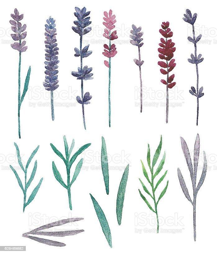Watercolor wild flowers vector vector art illustration