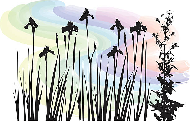 Watercolor Wildflowers A vector silhouette illustration  of blooming flowers and a thisle stem.  A pastel rainbow coloured wataer colour wave patten background. iris plant stock illustrations
