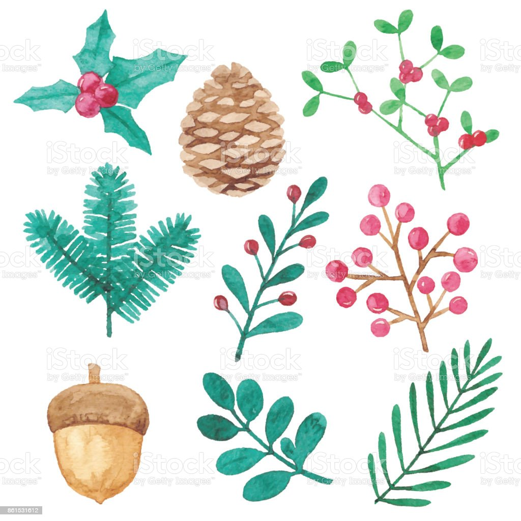 Watercolor Winter Plants Design Elements vector art illustration