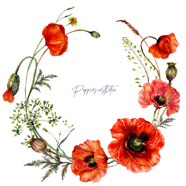 Watercolor Wreath made of Red Poppy Flowers in Vintage Style. vector art illustration