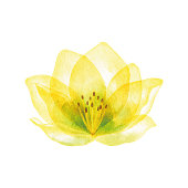 Vector illustration of yellow flower.